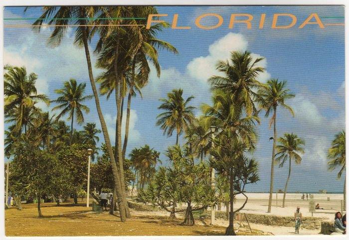 Tropical Florida Postcard  Palm Trees and Beach Photo by John Gordash  FL FLA #0526
