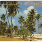 Tropical Florida Postcard  Palm Trees and Beach Photo by John Gordash  FL FLA #0526