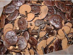 1 Kilo Dried whole Wild Reishi Mushroom Pack