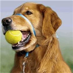 Gentle Leader Kit Medium Dog Blue