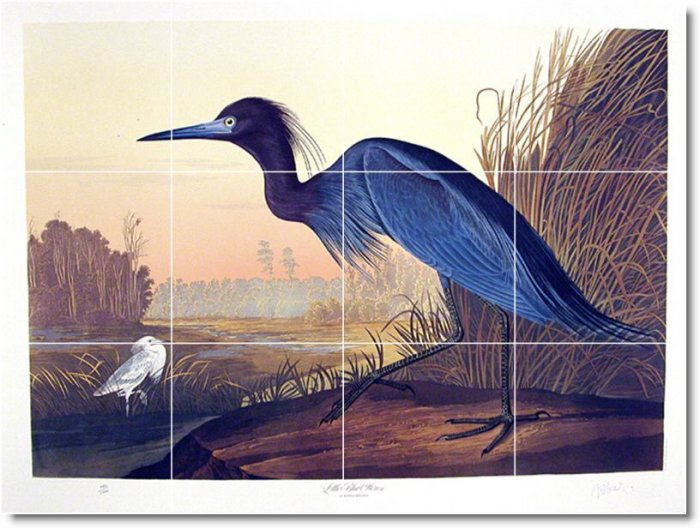 Audubon Birds Tiles Wall Room Renovations Idea Commercial Design