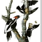 Audubon Birds Tiles Room Mural Interior Contemporary Renovations