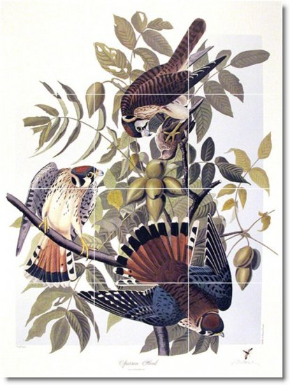 Audubon Birds Room Wall Tile Design Idea Residential Renovations