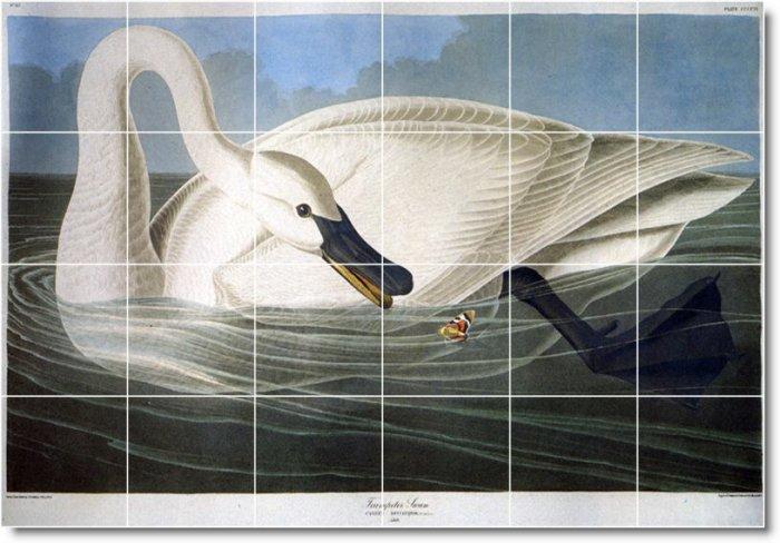 Audubon Birds Wall Room Tile Idea Residential Renovations Design