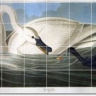 Audubon Birds Wall Room Tile Idea Residential Renovations Design