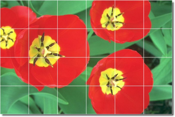 Flowers Photo Mural Kitchen Tile Interior Decorate Renovations