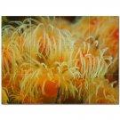 Coral Fish Underwater Ceramic Tile Mural Kitchen Backsplash Bathroom Shower 403030