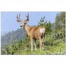 Deer Ceramic Tile Mural Kitchen Backsplash Bathroom Shower 402765