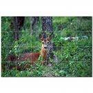 Deer Ceramic Tile Mural Kitchen Backsplash Bathroom Shower 402783