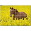 Horse Picture Ceramic Tile Mural Kitchen Backsplash Bathroom Shower 405285
