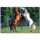 Horse Picture Ceramic Tile Mural Kitchen Backsplash Bathroom Shower 405286