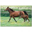 Horse Picture Ceramic Tile Mural Kitchen Backsplash Bathroom Shower 405289