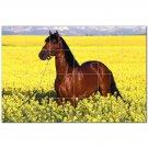 Horse Picture Ceramic Tile Mural Kitchen Backsplash Bathroom Shower 405290