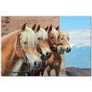 Horse Picture Ceramic Tile Mural Kitchen Backsplash Bathroom Shower 405294