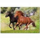 Horse Picture Ceramic Tile Mural Kitchen Backsplash Bathroom Shower 405296