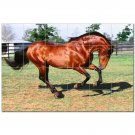 Horse Picture Ceramic Tile Mural Kitchen Backsplash Bathroom Shower 405312