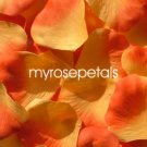 Petals - 200 Silk Rose Petals Wedding Favors -  Two Tone - Light/Dark Orange