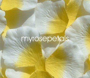Petals - 200 Silk Rose Petals Wedding Favors -  Two Tone - Yellow/White