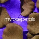 Petals - 200 Wedding Silk Rose Flower Petals Wedding Favors - Brown & Purple
