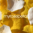 Petals - 200 Wedding Silk Rose Flower Petals Wedding Favors - White & Yellow