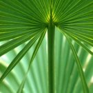 Palmetto Leaf Photo Print 8x10