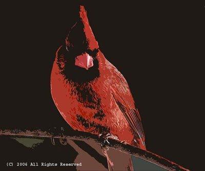 The Cardinal Photo Print 8x10