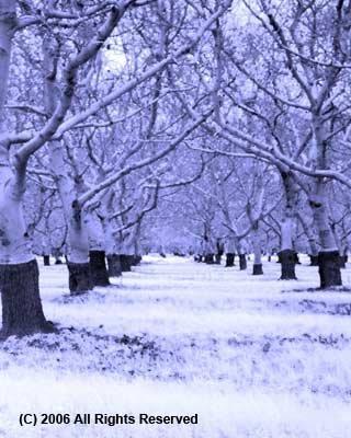 Ice Orchard Giclee Art Print 12x16