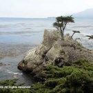 Monterey Bay Giclee Art Print 12x16