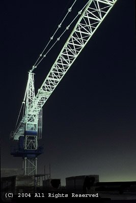 Night Crane Giclee Art Print 12x16