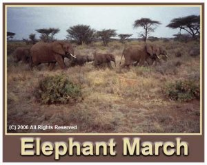 Elephant March Giclee Art Poster 16x20
