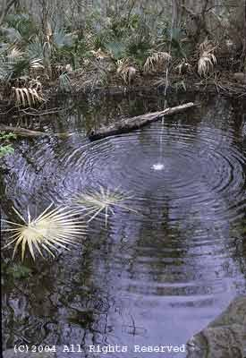Ripples in Palmetto Pond Giclee Art Print 12x16