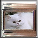 WHITE PERSIAN CAT ITALIAN CHARM