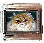 PERSIAN CAT ITALIAN CHARM