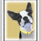 6 Boston Terrier Note or Greeting Cards