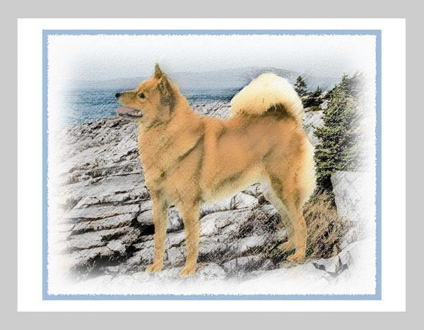 6 Finnish Spitz Note or Greeting Cards