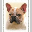 6 French Bulldog Note or Greeting Cards