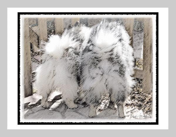 "6 Keeshond Note or Greeting Cards """"Keeshonds at the Gate"""""