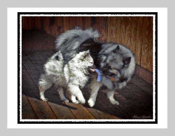 """6 Keeshond Note or Greeting Cards """"""""Playtime"""""""""""