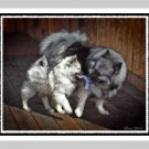 "6 Keeshond Note or Greeting Cards """"Playtime"""""