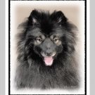 "6 Keeshond Note or Greeting Cards """"Shadow"""""
