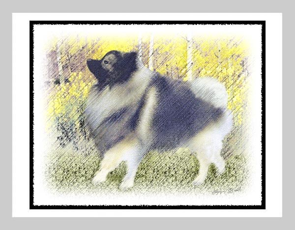 """6 Keeshond Note or Greeting Cards """"""""Stroll in the Aspen"""""""""""