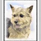 6 Norwich Terrier Note or Greeting Cards