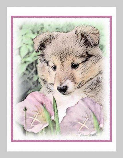 6 Sheltie Shetland Sheepdog Puppy Note or Greeting Cards