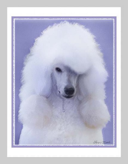 6 Standard Poodle Note or Greeting Cards