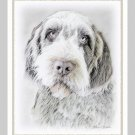 6 Wirehaired Griffon Note or Greeting Cards
