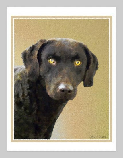 6 Chesapeake Bay Retriever Note or Greeting Cards