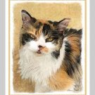 6 Calico Cat Note or Greeting Cards