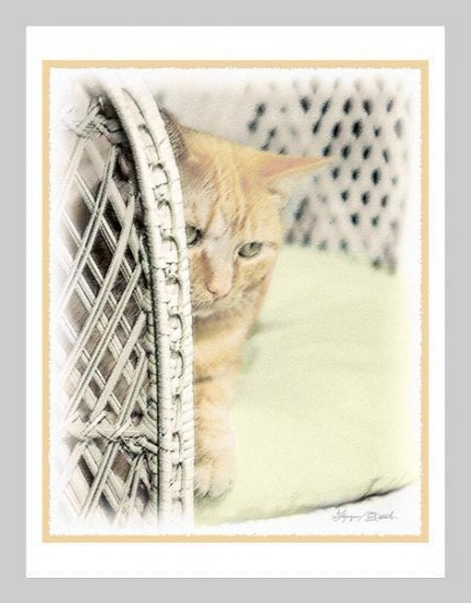 6 Yellow Cat in Wicker Chair Note or Greeting Cards