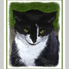 6 Black and White Tuxedo Cat Note or Greeting Cards