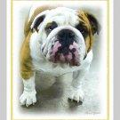 6 Bulldog Note or Greeting Cards